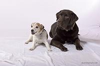 20141231_cc_dogs_1582b_200